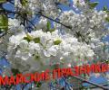 План городских мероприятий,  посвященных празднованию майских праздников (День весны и труда, День города, День Победы 2015 года)